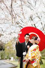 山口県からお越しになられたカップルの桜の中でのウェディング写真