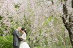 [和装洋装ロケーションプラン]京都で桜フォトウェディング