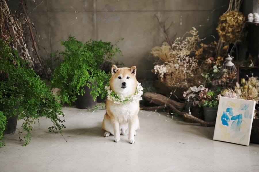 愛犬と一緒に撮影