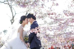 京都の桜洋装ロケ