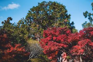 京都で紅葉の前撮り