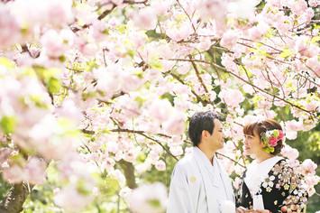 [人気]桜フォトウェディングプラン
