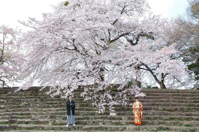 [早い者勝ち]桜シーズンの日時限定お得前撮りキャンペーン