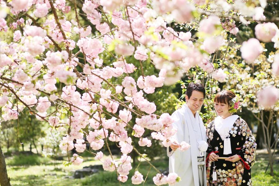 京都で桜の結婚前撮り撮影