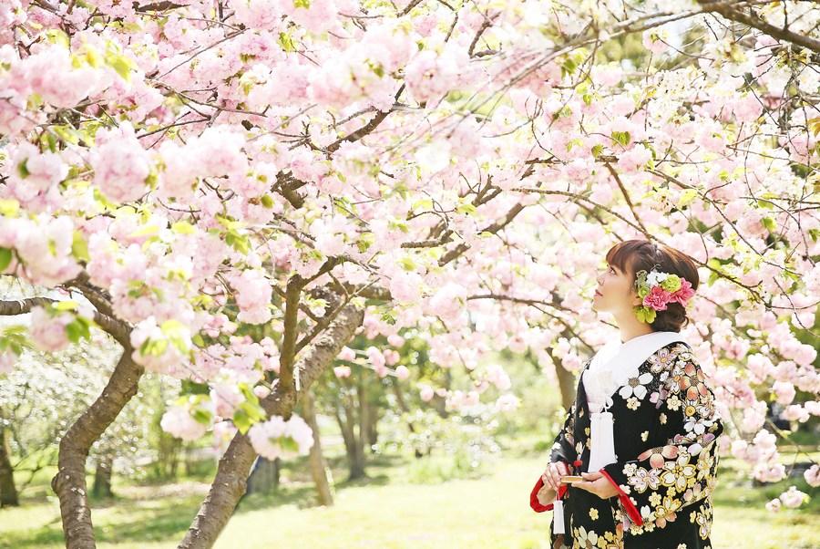 桜のフォトウエディング