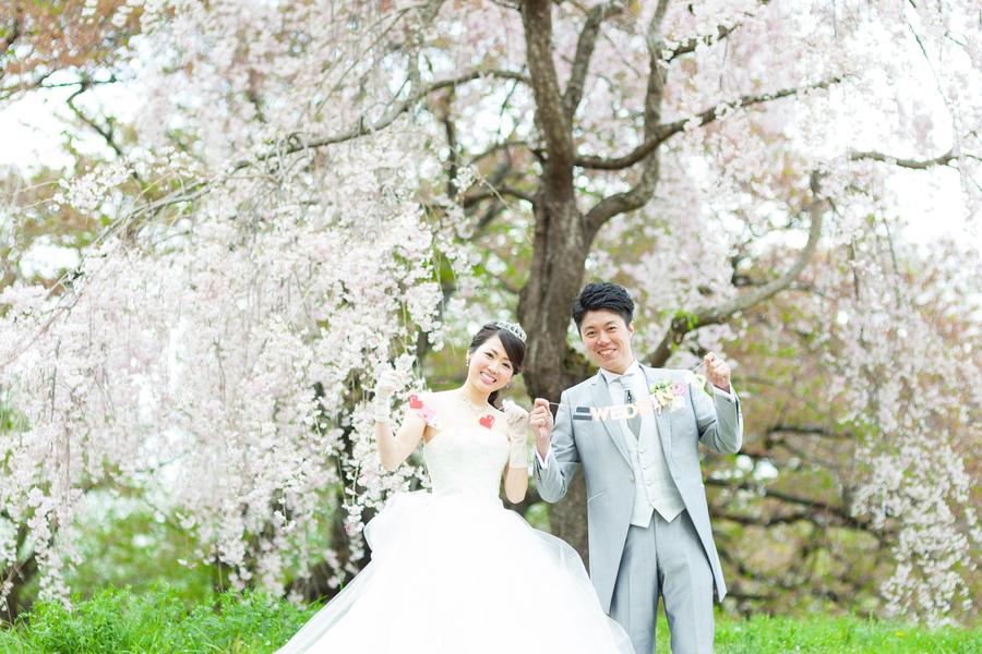 京都でウエディングドレスの桜結婚前撮り