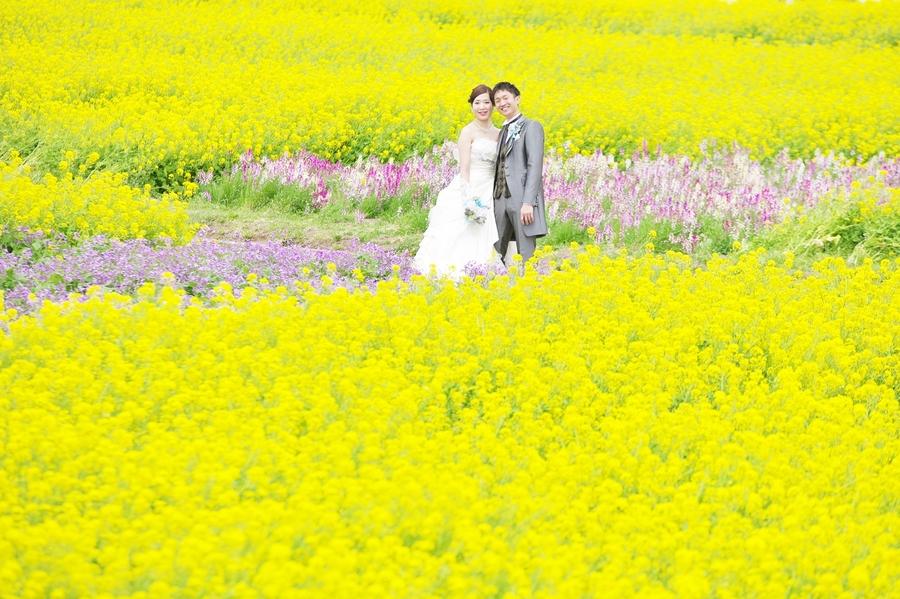 菜の花畑で結婚の前撮り